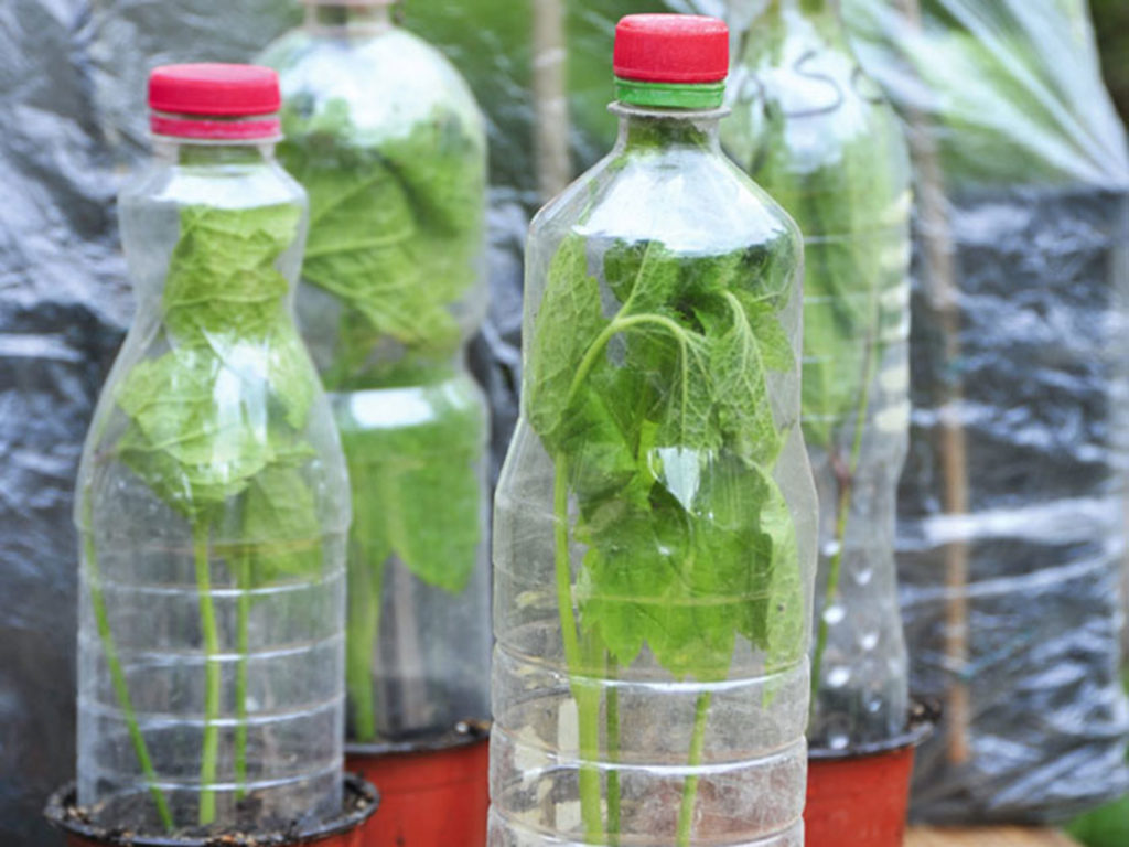 Flaschengewächshäuser