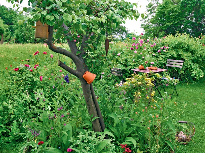Kleiner Garten mit Nachbargarten und niedriger Hecke begrenzt