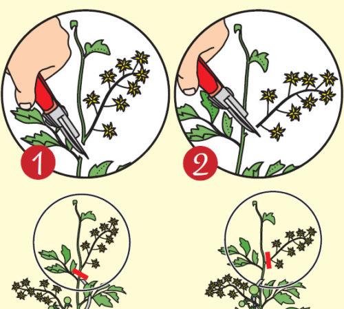 Tomaten schneiden Zwei Schritte Anleitung