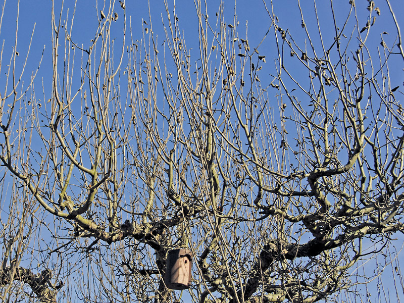 Apfelbaum Schneiden Wann : apfelbaum schneiden so bleibt er in form gartenflora ~ Watch28wear.com Haus und Dekorationen