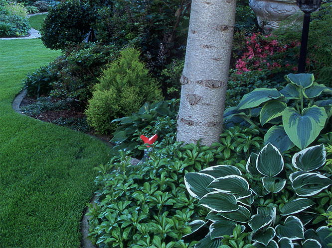 Baume Unterpflanzen Im Schatten Von Geholzen Gartenflora