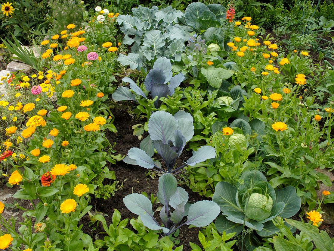 Beliebt Die Fruchtfolge im Gemüsegarten planen | GartenFlora GM43
