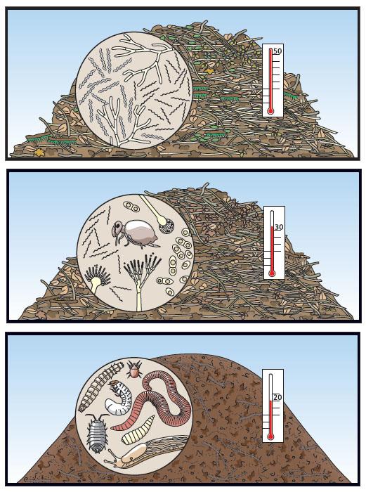 Die Phasen des Rotteprozesses, anschaulich dargestellt.