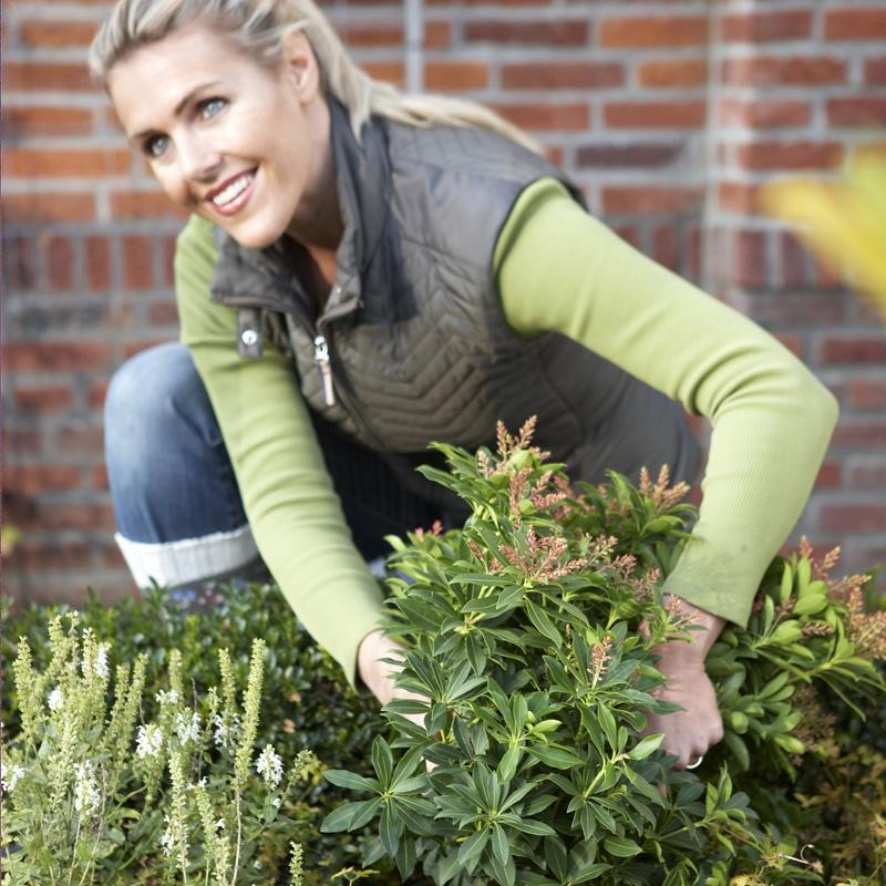 Der Herbst als perfekte Jahreszeit zum Pflanzen zeigt dieses Bild einer Frau bei der Pflanzung von Kübelpflanzen