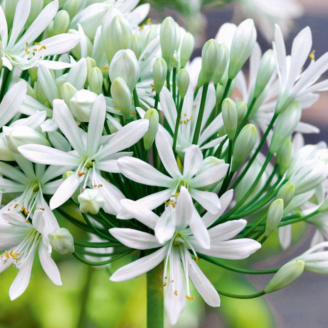 Terrassenpflanzen Unsere Top 10 Gartenflora