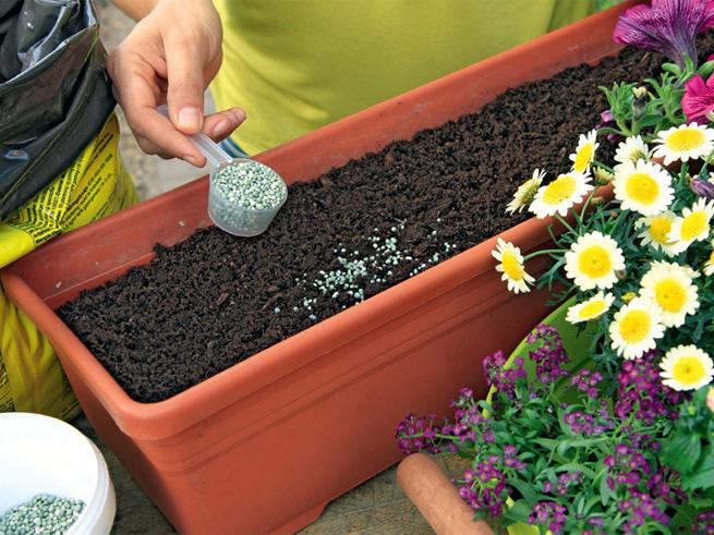 Düngung der Blumenerde vor der Bepflanzung des Balkons