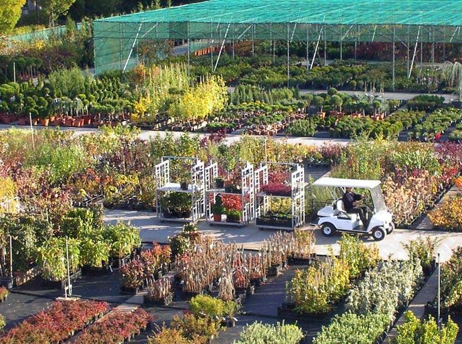 Übersichtsbild der zur Pflanzung bereitstehenden Qualitätsgehölzer in einer Baumschule