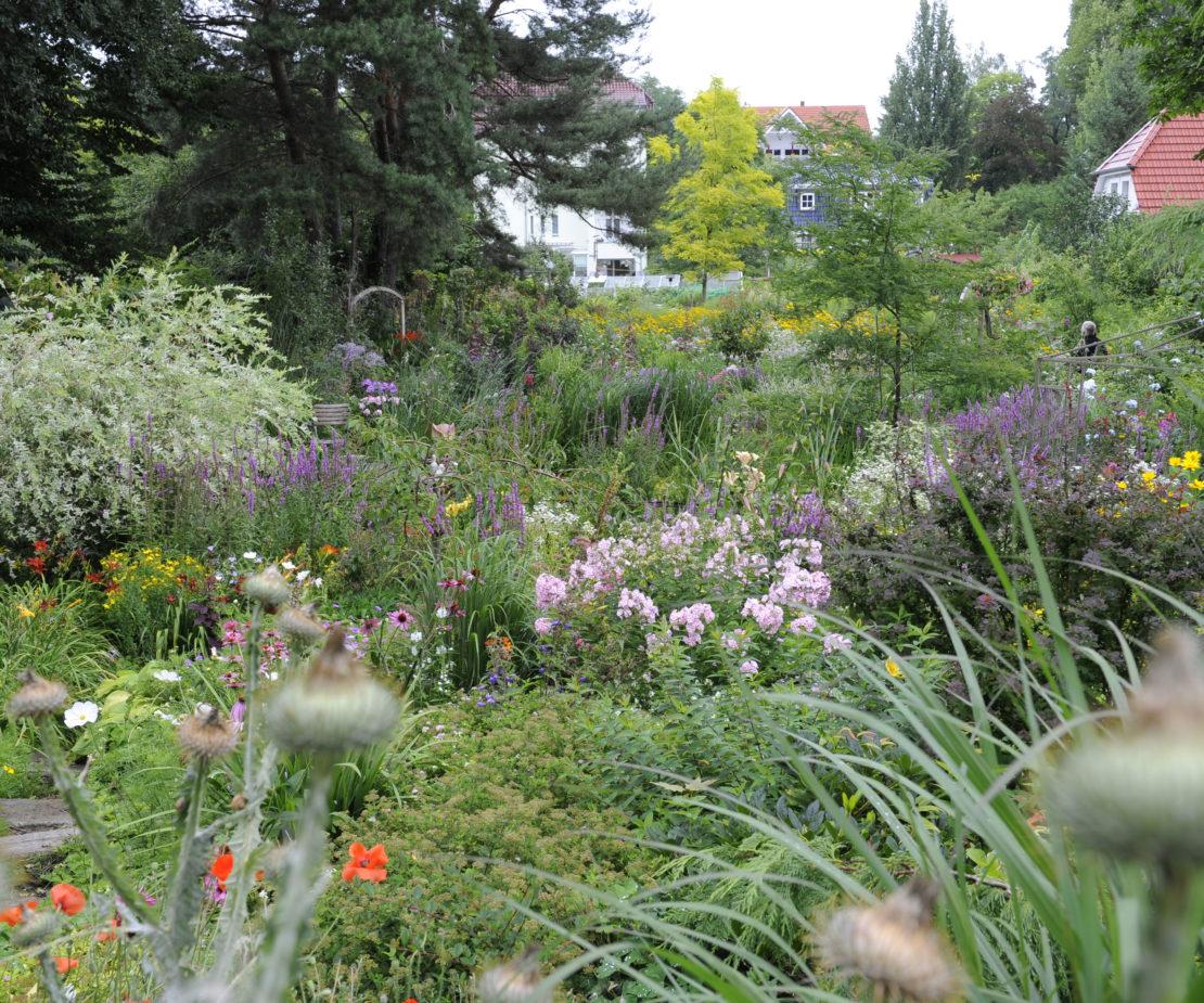 Verwilderter Garten in Falkensee