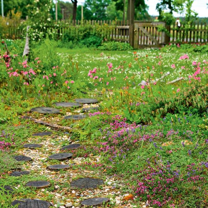 Heidegarten mit Blumenwiese im Spreewald