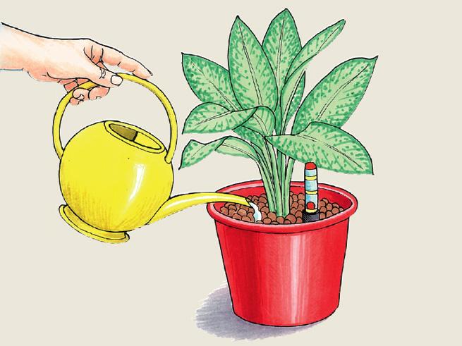 Illustration der Hydrokultur bei Zimmerpflanzen