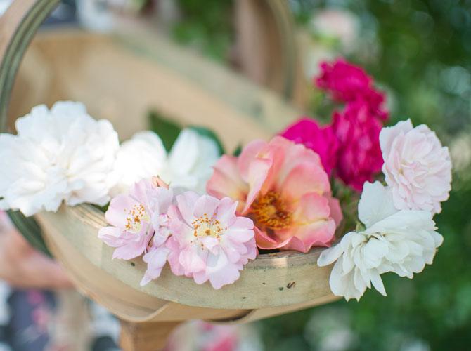 Rosenblüten in einem Korb im Ziergarten