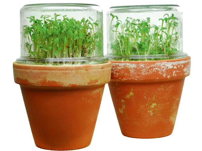 Kompost Dünger - Der Kressetest