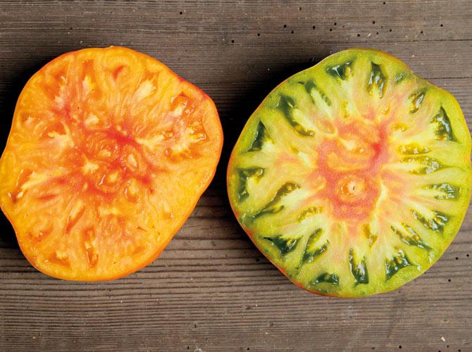 Die Fleischtomatensorten Lucky Cross und Aunt Ruby haben ein orangenes und grünes Fruchtfleisch.