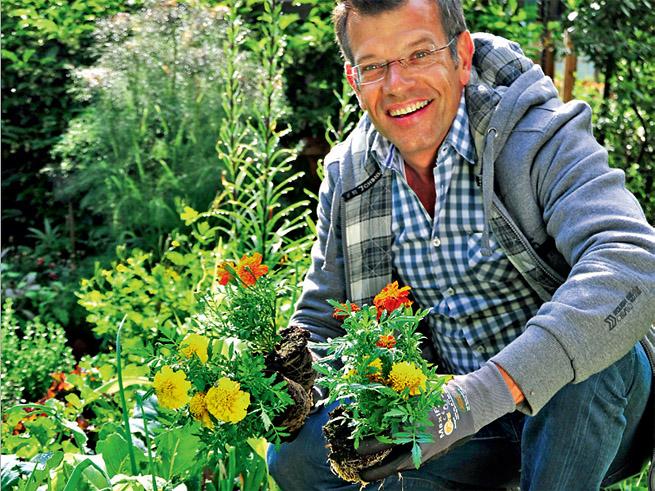 Mischkulturen im Gemüsebeet werden gepflanzt