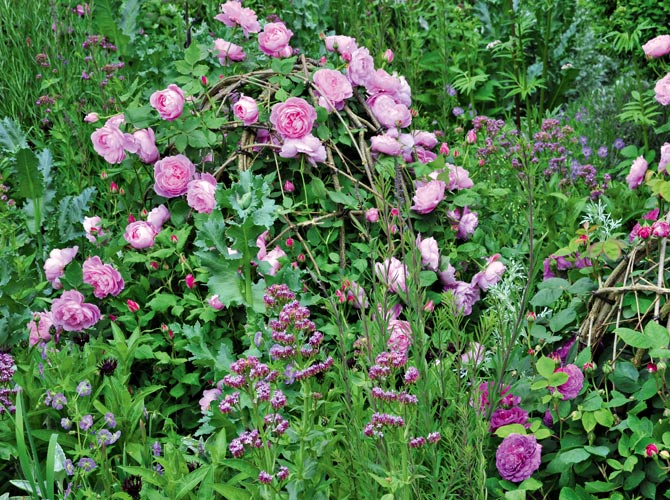 Rosen und Weidenruten-Stauden kombiniert