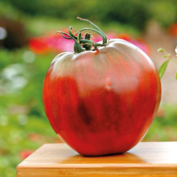 Die Tomatensorte Brad's Black Heart in der Großaufnahme