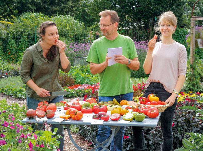 Tomatentester beim Geschmackstest