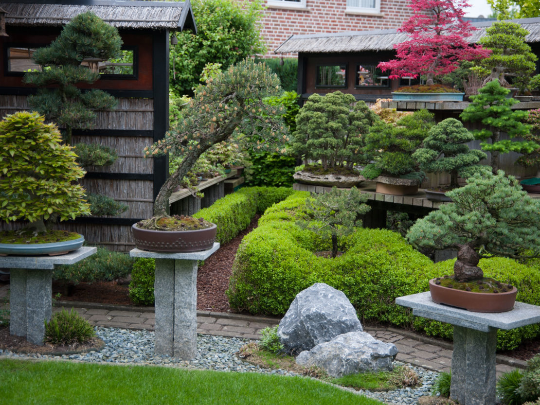 Bonsai Garten Gestaltung