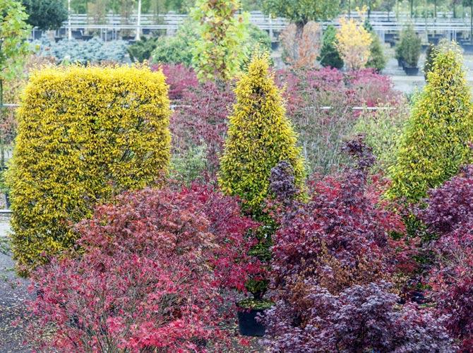 Eine Vielzahl an Pflanzen und Gehölzen steht für eine Pflanzung im Herbst bereit.