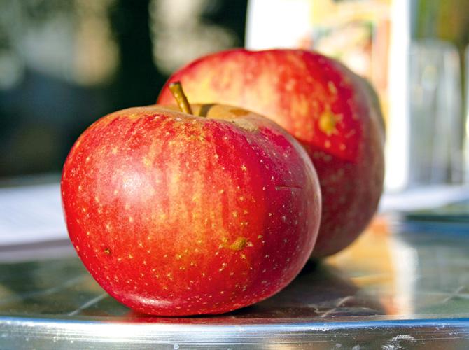 Apfel in Nahaufnahme im Artikel zur Nachpflanzung bei Obstbäumen