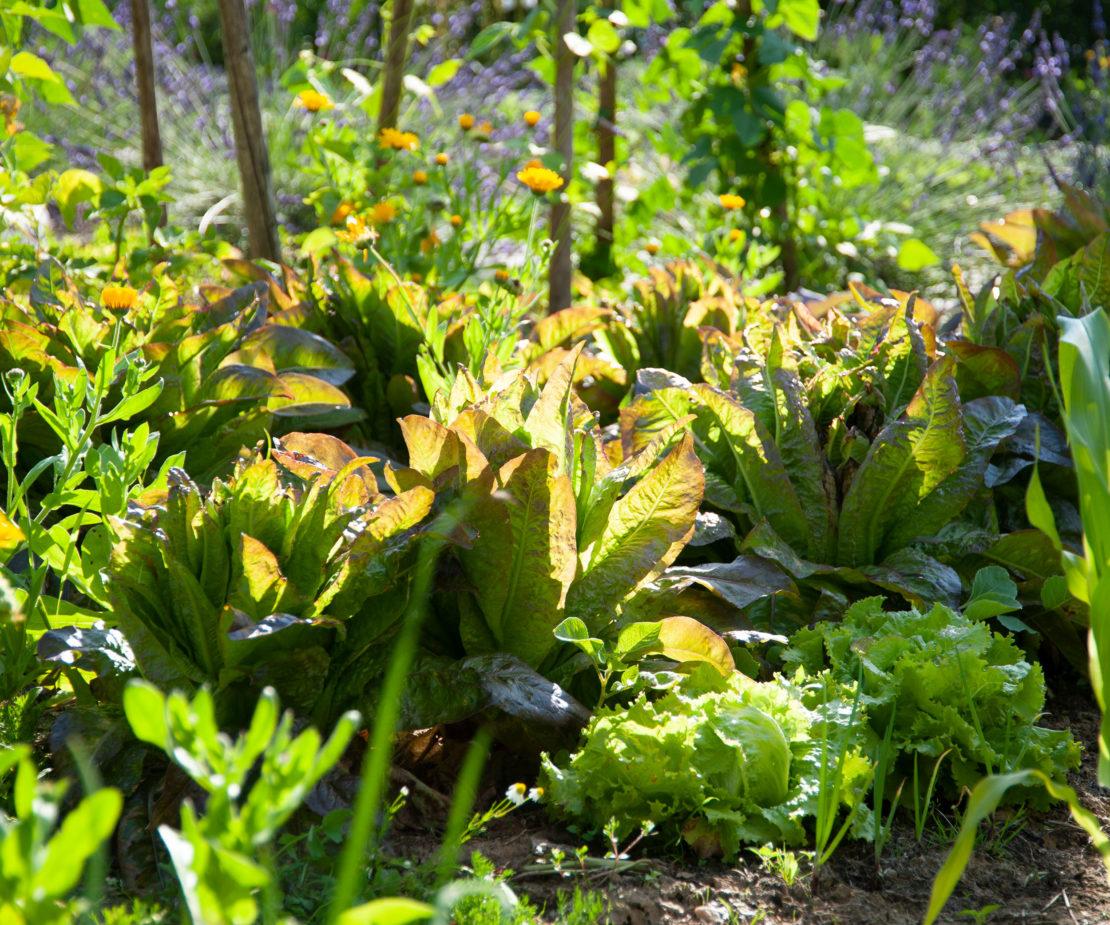 Gemüsebeet in der Sonne