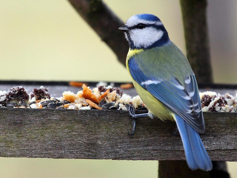 Wildvögel ganzjährig füttern