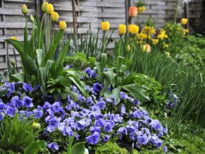 Blauer Garten bei Uta Beil