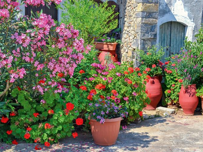 Blühende Kübelpflanzen in verschieden Varianten