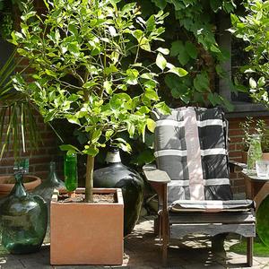 Terrakotta-Cube auf Terrasse