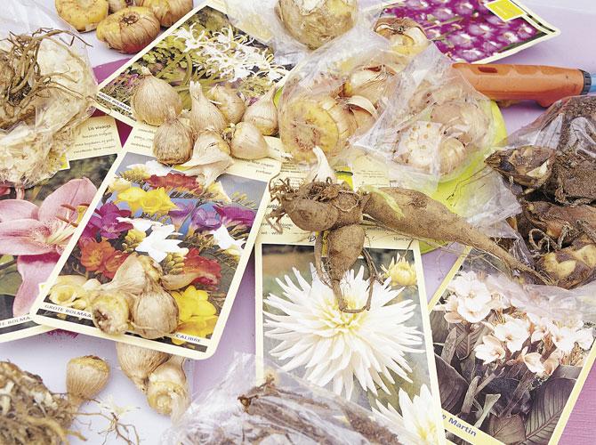 Zwiebel und Knollenpflanzen mit Pflanzenportraits