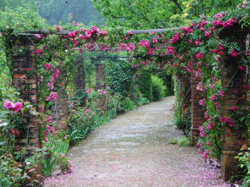 Ein Laubengang aus Rosenbögen