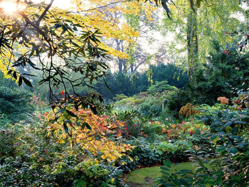 Waldgarten mit Sonnenstrahlen