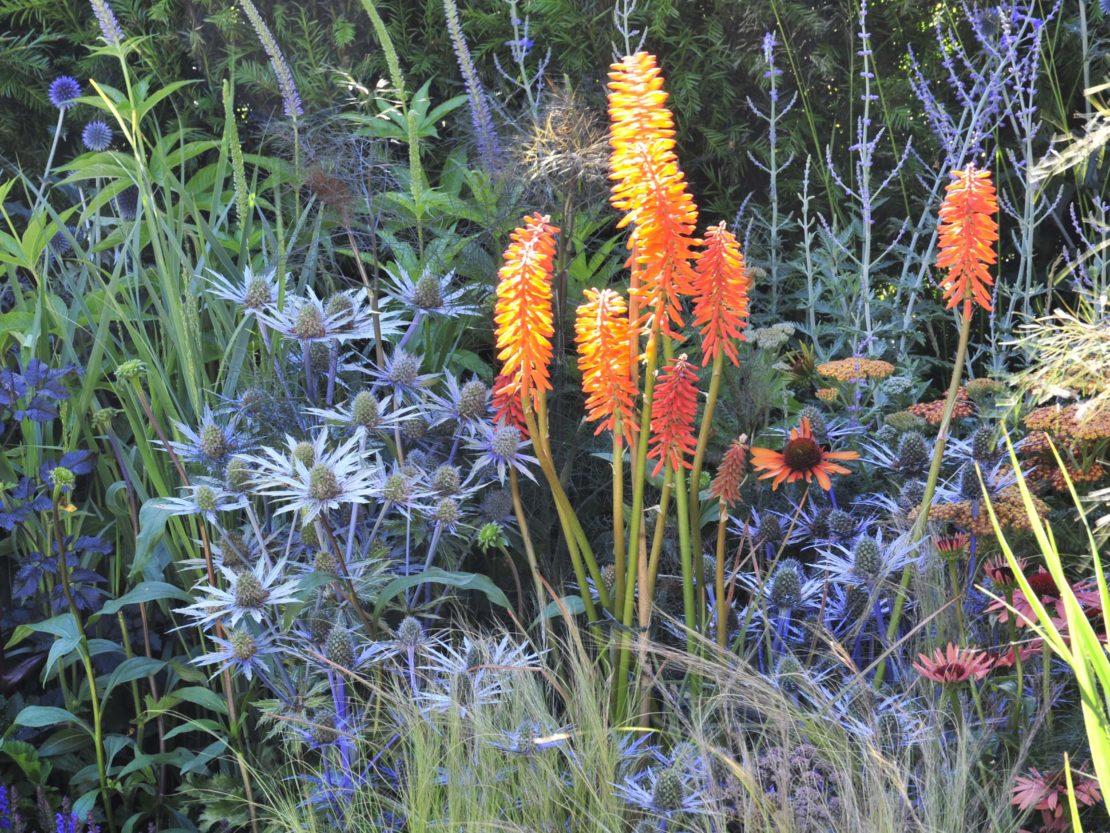 Fackellilie und Edeldisteln