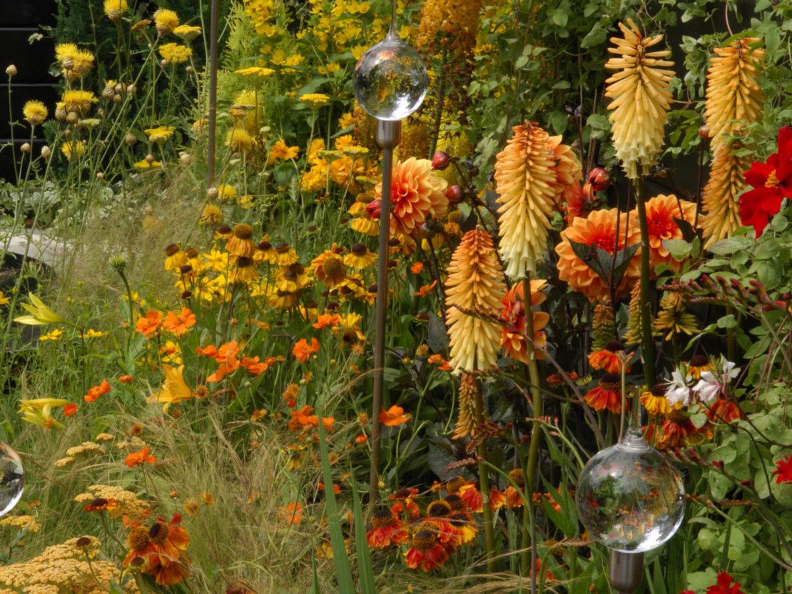 Fackellilie und Sonnenbraut