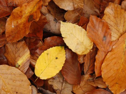 Falllaub im Herbst