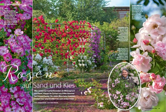 Impressionen aus einem Rosengarten - blühende Rosen in verschiedenen Farben