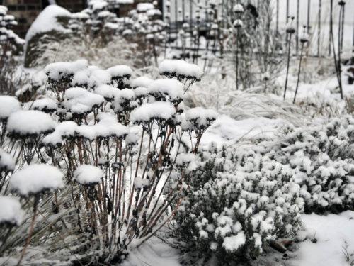 Mit Schnee bedeckte Stauden im Garten
