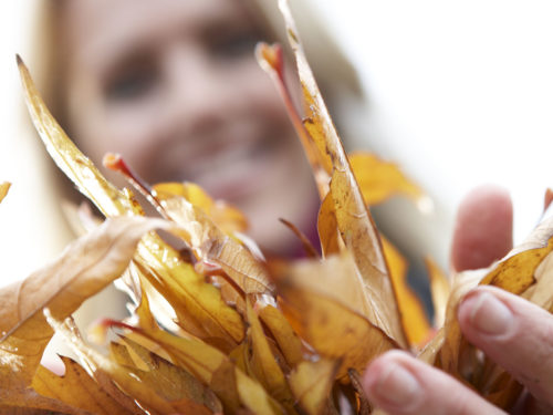 zwei Hände voll leuchtend goldgelber Blätter