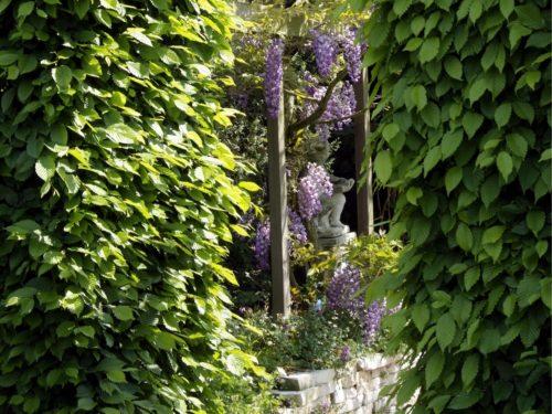 hohe Hecken bilden Eingang zu einem Gartenraum