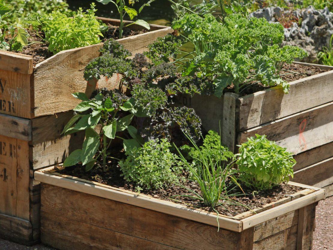 Mit Gemüse bepflanzte Holzkisten