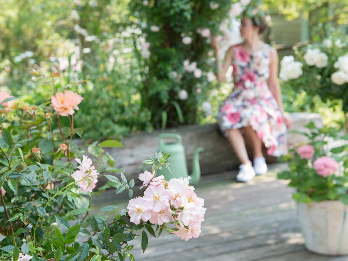 blühende Rosen in Kübeln auf einer Terrasse