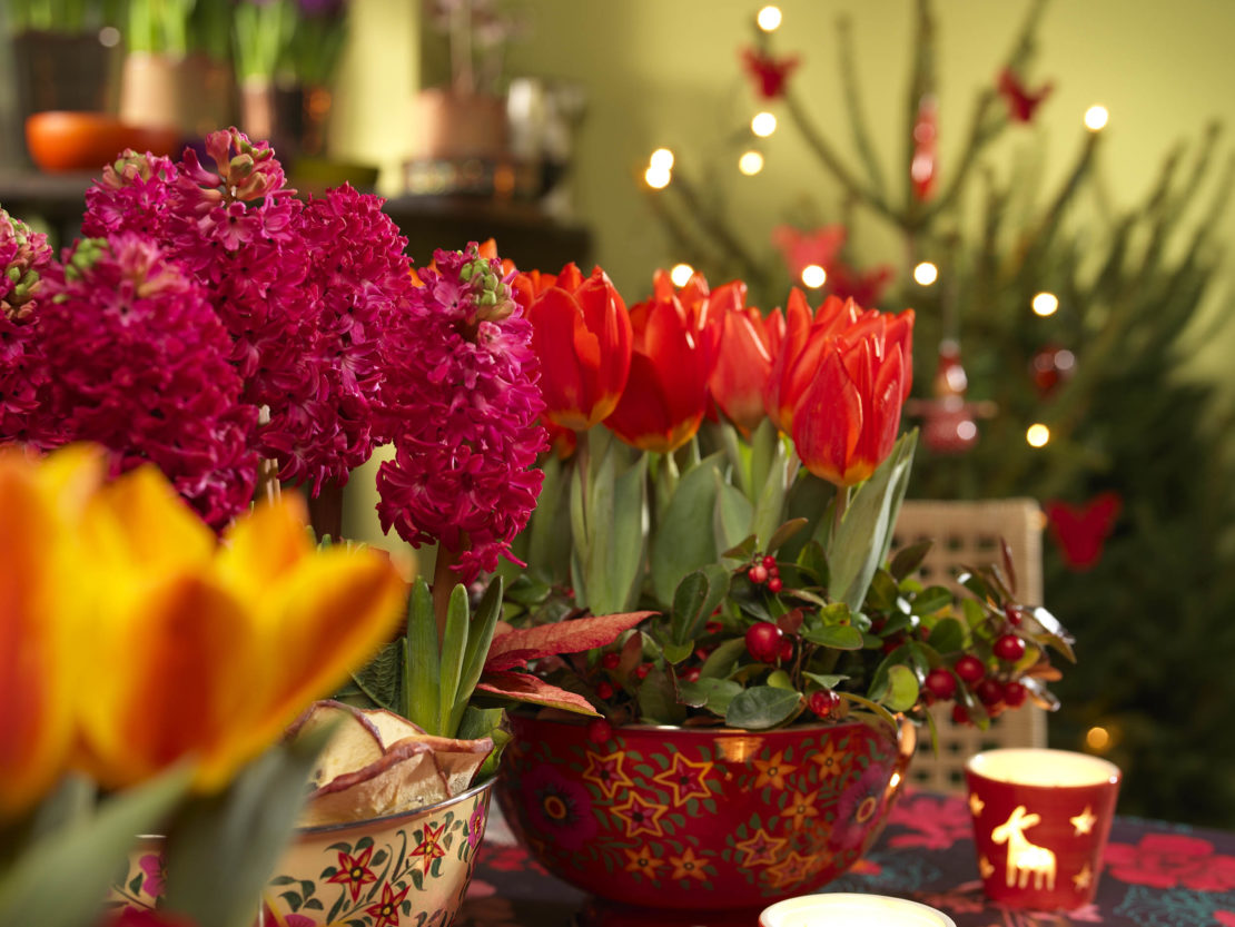 Zwiebelblumen in Gefäßen und geschmückter Weihnachtsbaum