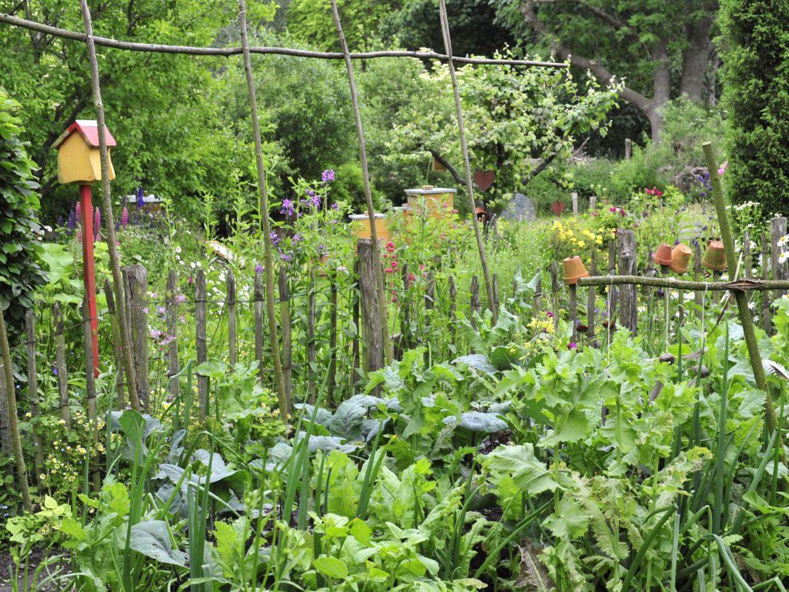 Von einem rustikal wirkenden Holzzaun umgebener Gemüsegarten