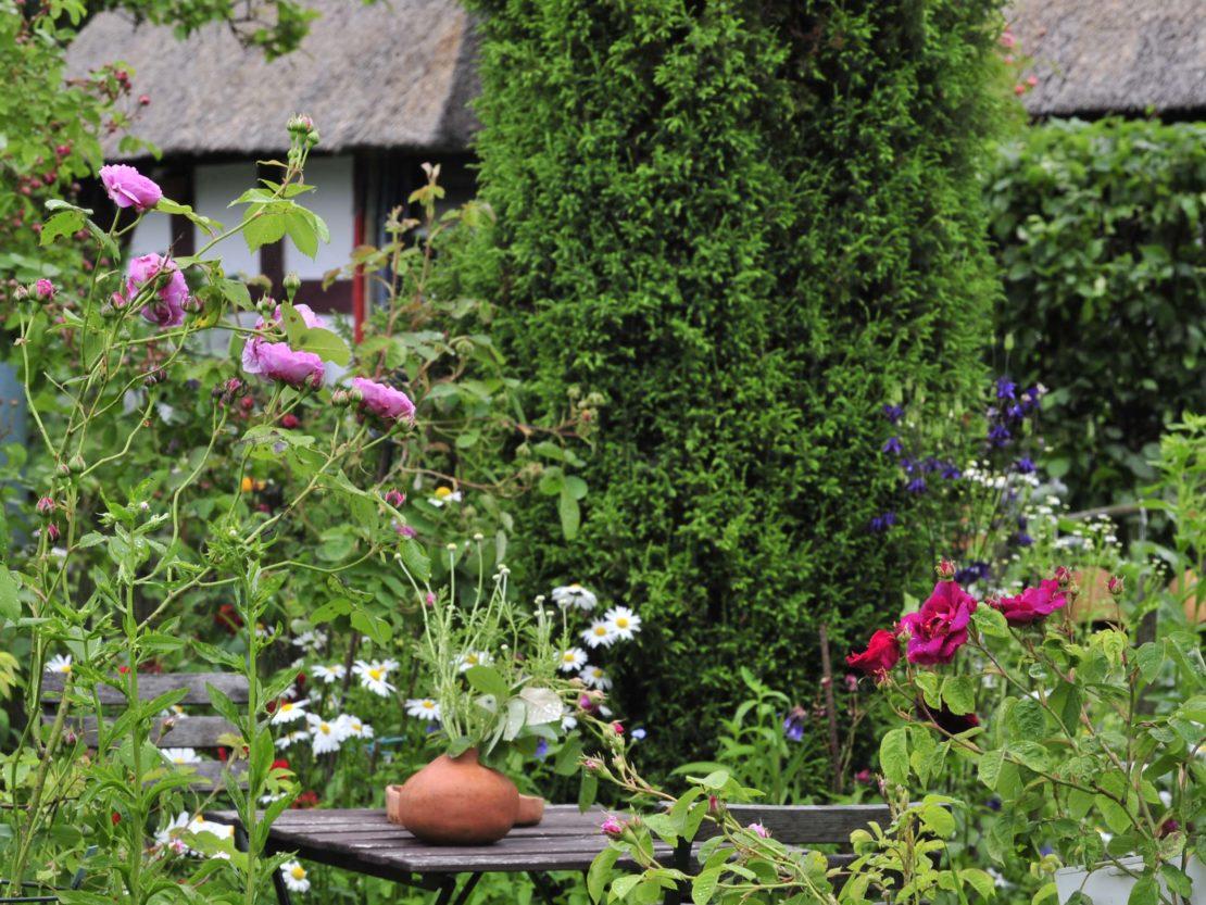 Pflanzenvielfalt mit Rosen, Stauden und Gehölzen wie in einem Cottage Garten