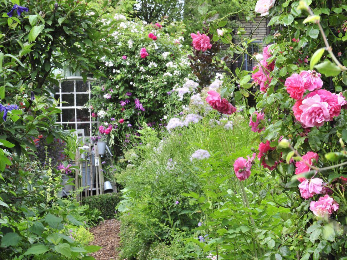 Romantische Gartenimpression wie im Cottage Garten dank Kletterrosen und Stauden