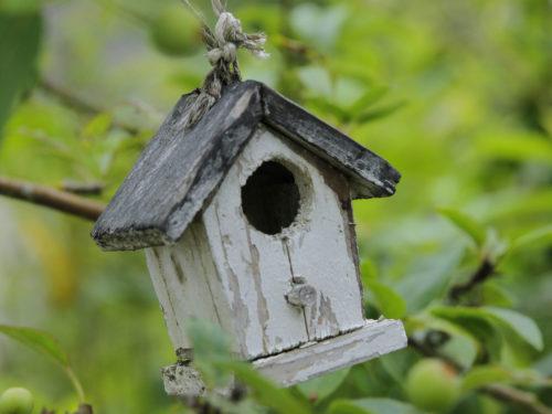 altes Vogelhäuschen mit verwittertem Anstrich in einem Obstbaum