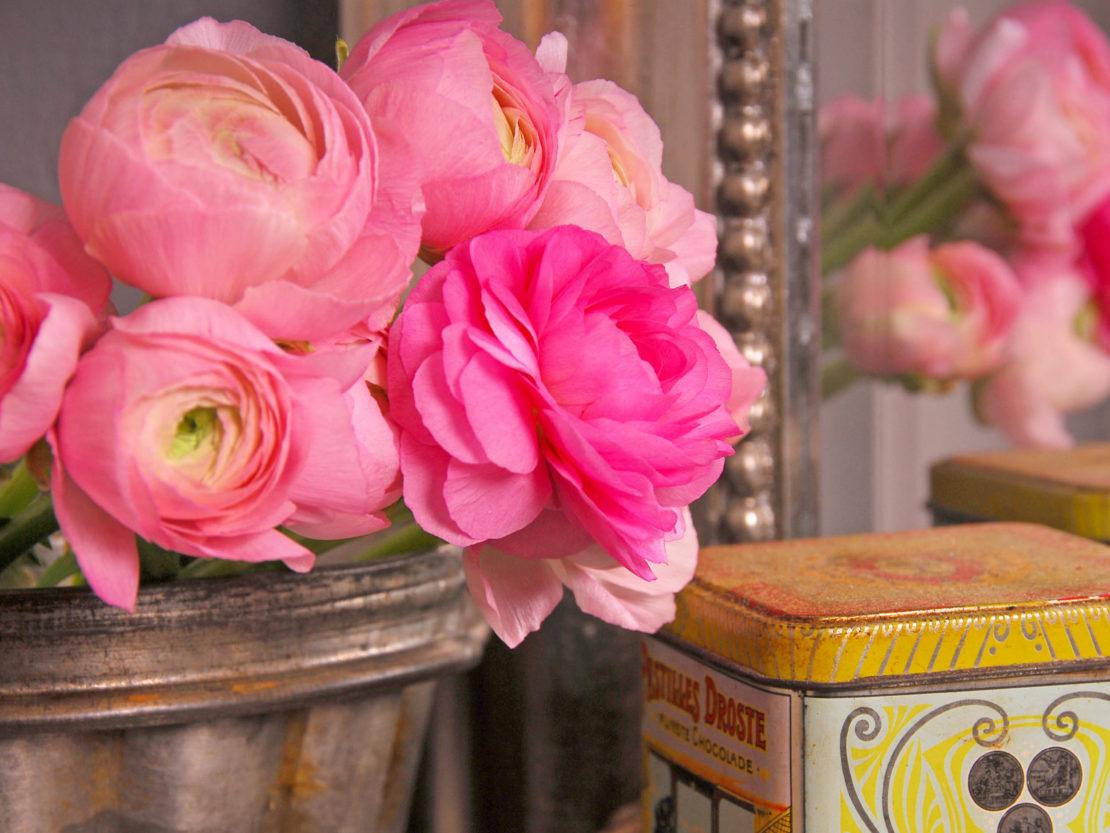 Ranunkeln mit Blüten in pastelligem Rosa und kräftigem Pink