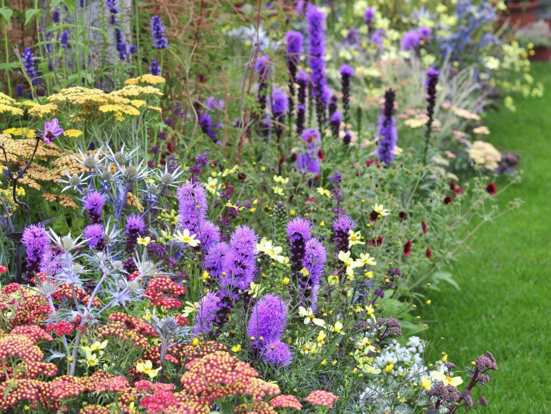 Beetgestaltaltung mit unterschiedlichen Blütenständen