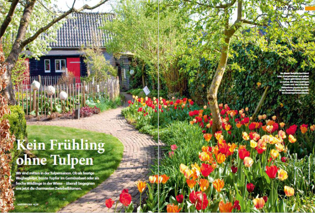 Impressionen Frühlingsgarten mit Tulpen