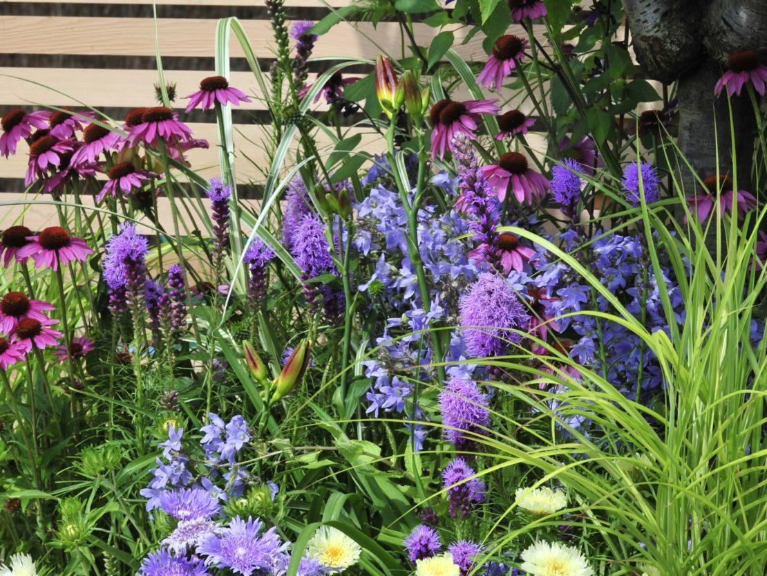 Staudenbeet mit Blüten in Blautönen und Violett